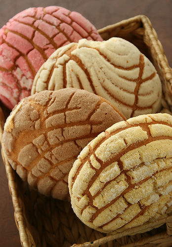 REAL CONCHAS FOR REFRENCE & COMPARISON